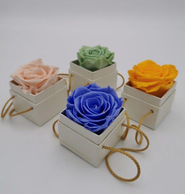 1er Rosen mit Schnur