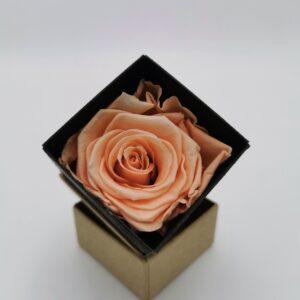 Einzelrose Rosa