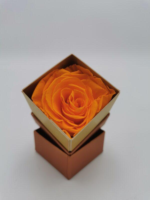Einzelrose Orange