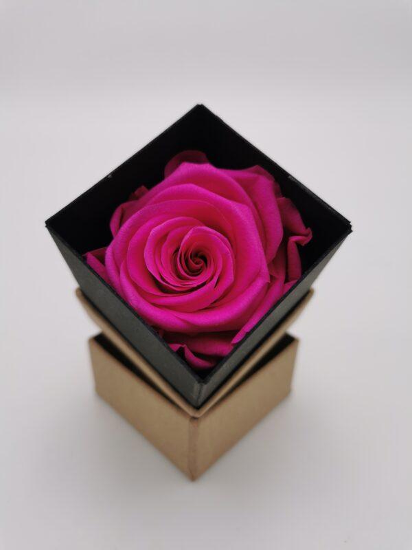 Einzelrose pink