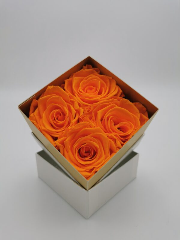 Rosenbox 4er orange