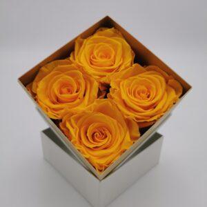 Rosenbox 4er gelb